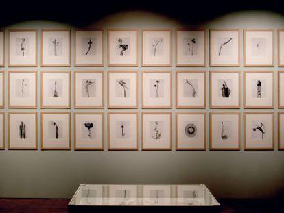 Algunas de las fotografías de Joan Fontcuberta expuestas.