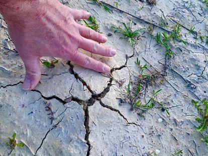 Agrietamiento del terreno, señal inequívoca de las trufas del desierto.
