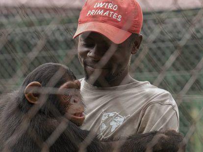Ephraim Ngiribwa, uno de los empleados del Centro de Rehabilitación de Primates de Lwiro, abraza a un joven chimpancé.