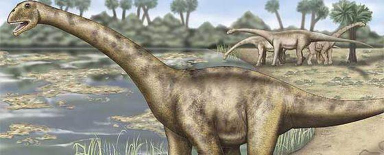 Hallados En Teruel Fosiles De Dinosaurios Gigantes Sociedad El Pais Además, los paleontólogos también descubrieron fósiles del cráneo de otro titanosaurio, ya conocido. de dinosaurios gigantes