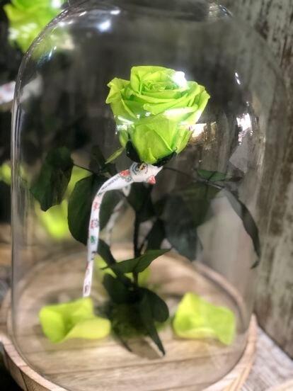 Una de las flores de Fernando.