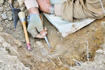Huesos hallados de la nueva especie en la comarca castellonense de Els Ports.