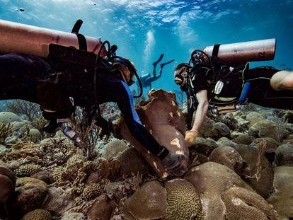 Dos buzos giran piezas de coral a su posición original tras un accidente causado por la constructora holandesa BAM International en la isla de Curazao en 2017. / OCEAN ENCOUNTERS