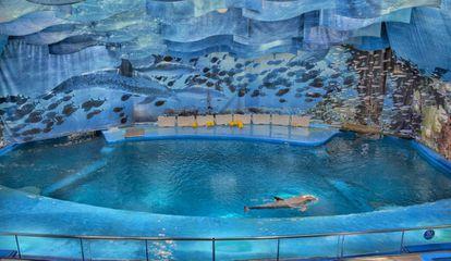 Un delfín, este miércoles, al delfinari de Barcelona.