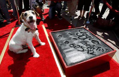 'Uggie', tras dejar sus huellas en el Teatro Chino Grauman de Hollywood.