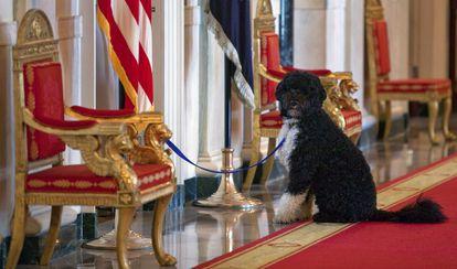 Imagen de 2010: Bo, el perro de los Obama, espera en la Casa Blanca afuera de un evento de la primera dama Michelle Obama.
