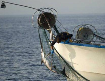 Un arte de pesca ilegal en la UE.