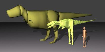 Reconstrucción de dos tiranosauros rex (<i>Sue</i>, y el más pequeño <i>Jane</i>) utilizados en la investigación sobre su tamaño, junto con una figura humana para mostrar la escala.