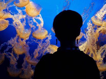 Una mujer observa medusas en el Zoo y Acuario Omaha's Henry Doorly de Omaha, Estados Unidos
