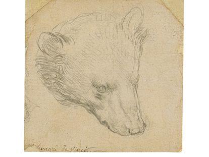 'Cabeza de un oso', dibujo de Leonardo da Vinci.