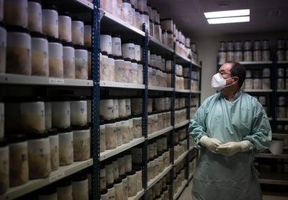 El patólogo Alberto Rábano examina cerebros humanos en el Banco de Tejidos de la Fundación CIEN, en Madrid.