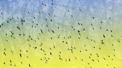 Una bandada de pájaros.