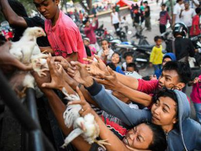 La desesperación crece entre los que sobrevivieron al terremoto y tsunami que arrollaron la isla de Célebes