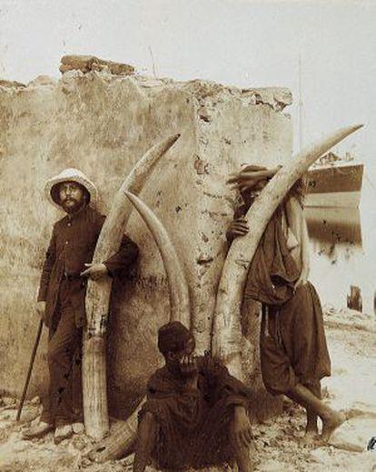 Marfil d'ullals d'elefant, juny de 1894.