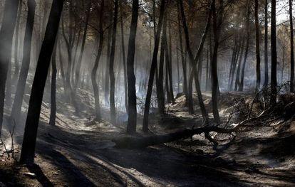 Un monte quemado a causa del incendio entre las localidades de Sot de Chera y Chulilla (Valencia).