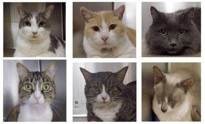 Gatos analizados en el estudio.