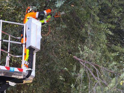 Un podador corta una rama de un olmo del parque Tierno Galván de Madrid.