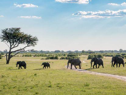 Una manada de elefantes en el parque nacional Hwange (Zimbabue).