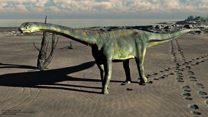 Reconstrucción del aspecto del dinosaurio 'Turiasaurus riodevensis' tras el hallazgo del cráneo.