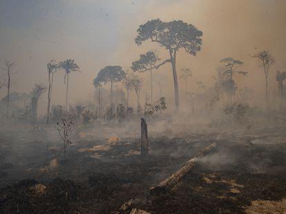 Una vez degradadas, las porciones de selva que quedan están aún más expuestas a los incendios, como este desatado cerca de Novo Progresso, en el estado de Pará, Brasil, en agosto pasado.