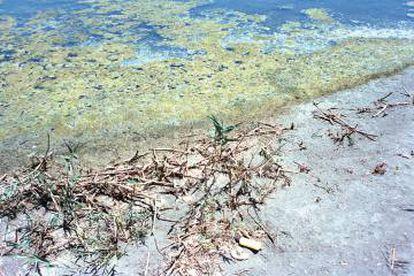 Desde 2016, la laguna ya no es azul, sino verdosa y no invita al baño.