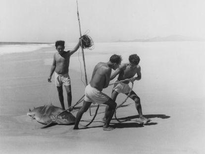 'Tiburoneros', de 1950.