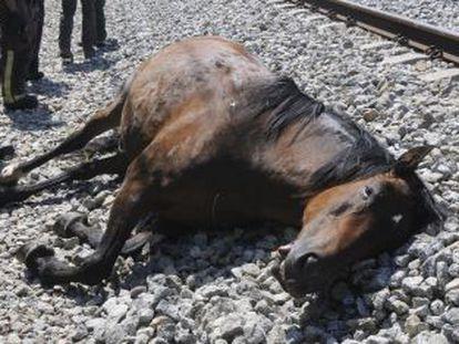 Cuerpo de uno de los caballos atropellados, junto a la vía de tren.
