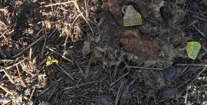 Montones de basura y restos de animales en Fuentepelayo.