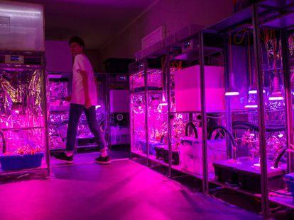 El laboratorio de alimentos de Superflux, en el CCCB.