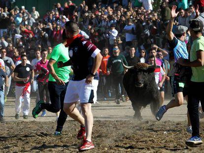 Festejo del Toro de la Vega este martes en Tordesillas.