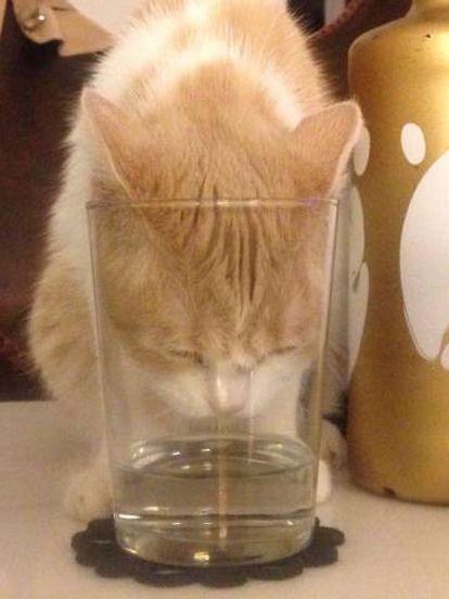 'Mía' bebiendo a la velocidad de la luz