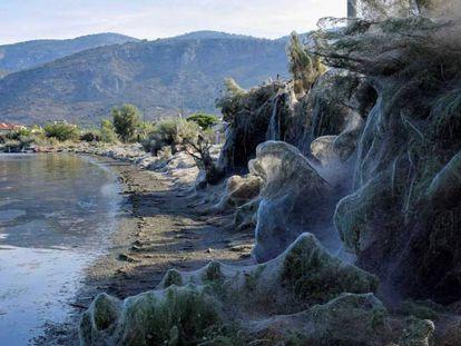 La playa de Aitoliko, al oeste Grecia, invadida por las telarañas.