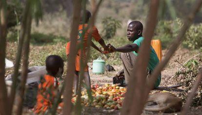 Agricultores recogen tomates de un huerto en medio de un bosque en Gulbi (Níger).