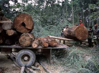 Tala ilegal de árboles en Tesso Nilo (en la isla de Sumatra).