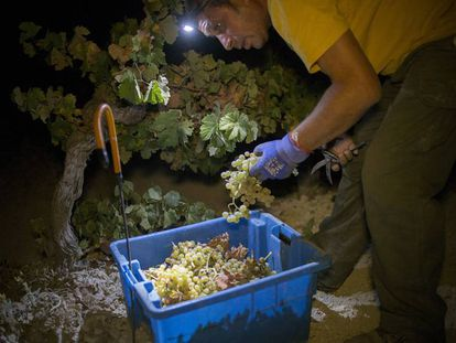 Viticultores recogiendo uva en Jerez de la Frontera por la noche.
