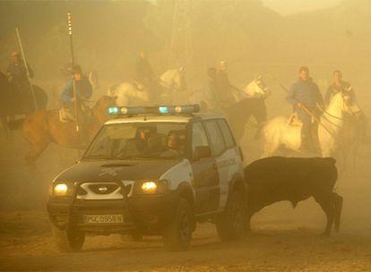 El toro de Tordesillas, perseguido por los lanceros a caballo, se refugia detrás de un coche de la Guardia Civil.