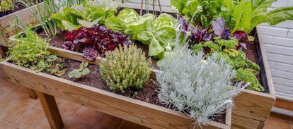 Plantación de hortalizas en una terraza de Madrid.