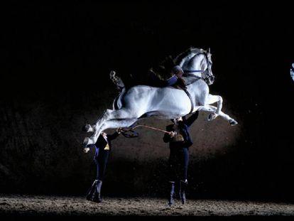 Un caballo de la Real Escuela Andaluza de Arte Ecuestre de Jerez.