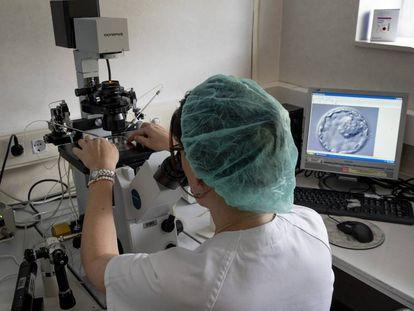 Una doctora mira a través del microscopio una muestra de embrión en el centro de reproducción asistida del hospital Virgen del Rocío en Sevilla.