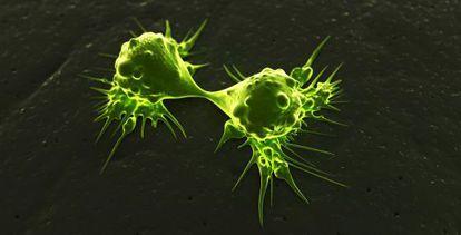 Células cancerosas dividiéndose.