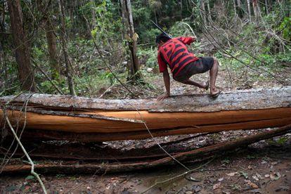 Un jefe indígena salta un árbol talado ilegalmente en el estado de Pará (Brasil).