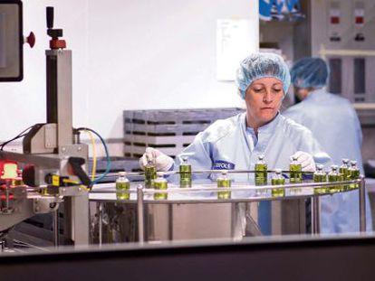 Trabajadores de Grifols manipulan las dosis de albúmina esterilizada en sus laboratorios de Parets del Vallés (Barcelona).