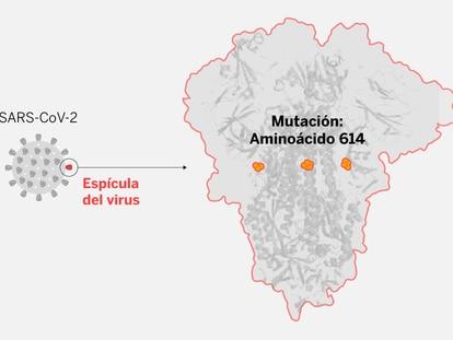La enigmática mutación del coronavirus que ahora domina el planeta
