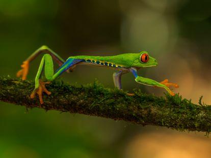 Fauna de Costa Rica.