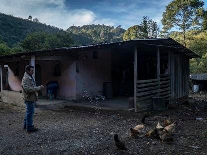 Un campesino del Estado de Guerrero, uno de los más pobres de México, alimenta a sus gallinas.