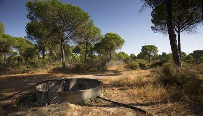 Captación ilegal en Lucena del Puerto, en el entorno de Doñana.
