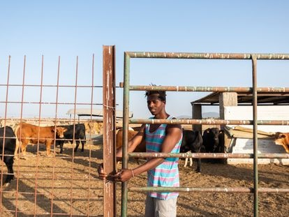 Madou Traoré, 28 años, cierra la puerta del ganado en la finca donde trabaja en Malpartida (Cáceres).