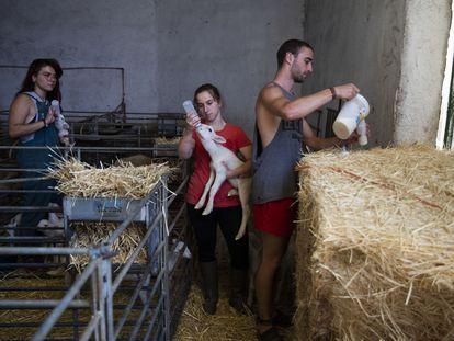 Alumnos del programa de prácticas en el entorno rural de la Universidad de Zaragoza en una granja de Cubel, un pueblo aragonés de menos de 3.000 habitantes, en 2019.