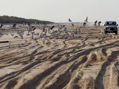 Un todoterreno por las dunas del parque nacional de Doñana.