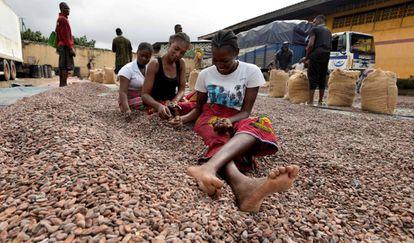 Un grupo de mujeres selecciona granos de cacao, el pasado 3 de julio en Abiyán (Costa de Marfil).